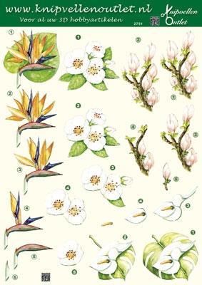 KO2751 Bloemen