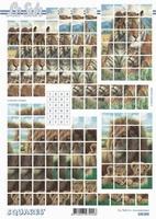 630205 Le Suh Pyramids dieren