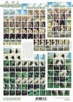630206 Le Suh Pyramids dieren