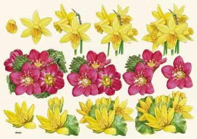 VB0053  Bloemen Narcissen