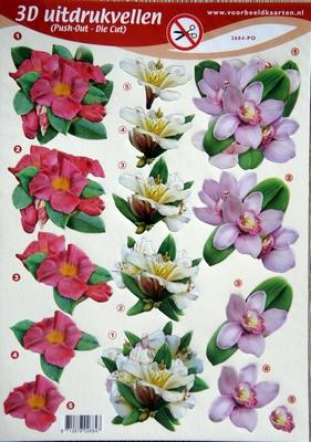 PO2684 Push Out bloemen
