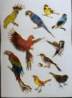 STE234 Vogels Kakatoe  afm.stickervel 10 X 7,50 CM