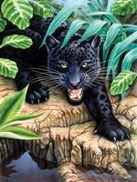 PJS42 PBN  Junior Small BLACK LEOPAR