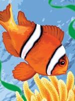 PJS56 PBN Junior Small CLOWN FISH