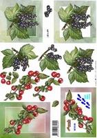 8215145 LeSuh Vruchten
